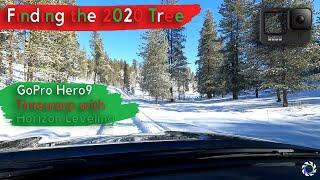 Finding the 2020 Tree, GoPro Hero9, Timewarp with Horizon Leveling