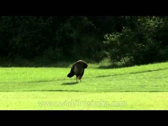 The Peacock Course at Delhi Golf Course