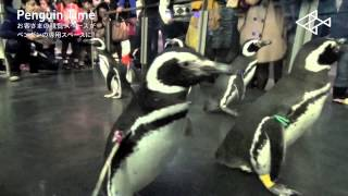 お客さまの観覧スペースが、すみだ水族館の「ペンギンタイム」中は、ペ...
