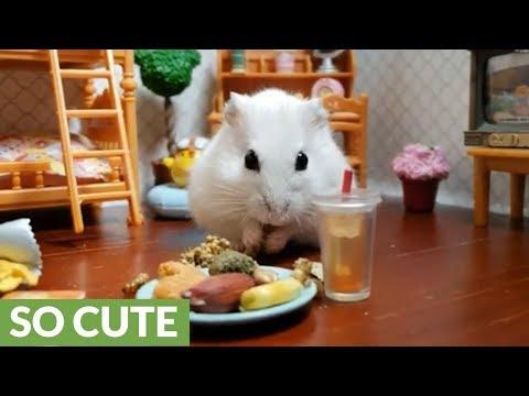 Happy hamster enjoys tasty after school snack