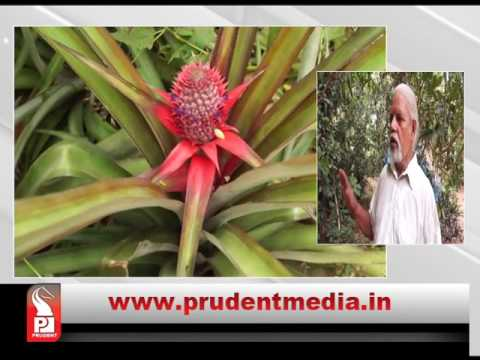 organic farm Konkani prime 160517│Prudent Media Goa