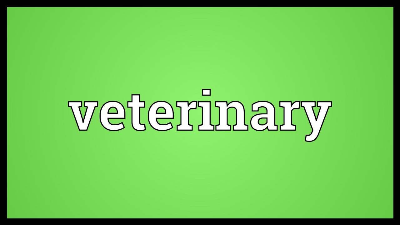 Veterinary Meaning