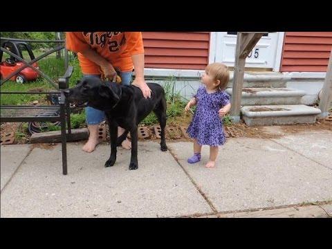dog-attacking-visitors---dog-whispering-big-chuck-mcbride---dog-intervention