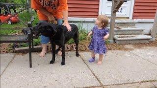 Dog Attacking Visitors -  Dog Whispering Big Chuck Mcbride - Dog Intervention