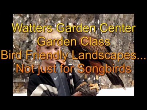 Bird Friendly Landscapes...not just for songbirds – Special Raptor Event
