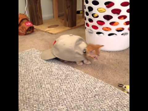 fat cats bowling