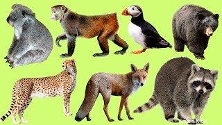Животные для детей | Учим диких животных | Учим звуки и голоса животных|Учим названия диких животных