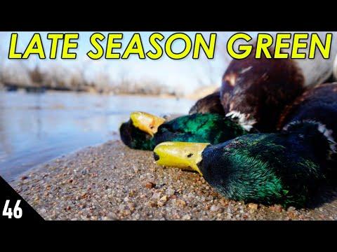 Late Season MALLARDS   28 GAUGE Nebraska Duck Hunting 2021