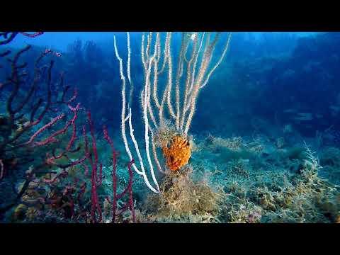 SAD CYCLOPS Scilla Diving Center von YouTube · Dauer:  6 Minuten 18 Sekunden