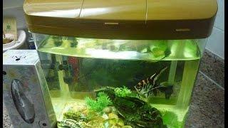 حوض سمك للبيع به 3 اسماك جميلة