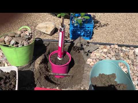 Planting a Cherry Tree