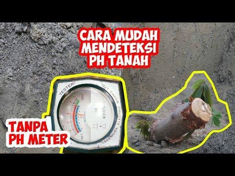 PH Tanah | Cara Mengetahui PH Tanah Tanpa PH Meter | Melastoma Malabathricum | Takemura DM-15