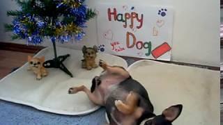 Как научить собаку команде Умри