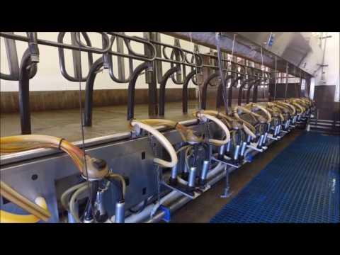 Dairy Farm Rolfe, Iowa - Q&Q Farming