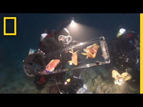New Invention Keeps Deep-Sea Creatures Alive At Surface | National Geographic