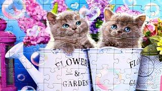 Пазл Пушистые котята - собираем пазлы с животными для детей Милые Котята | Danik and Lesha