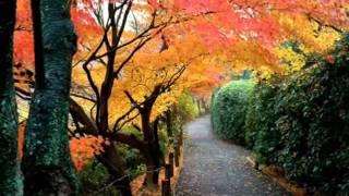листья желтые.wmv