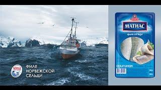 Почему норвежцы выбрали сельдь «Матиас»