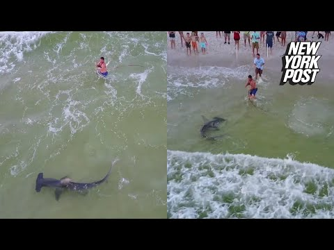 Fisherman on crowded beach catches giant hammerhead | New York Post