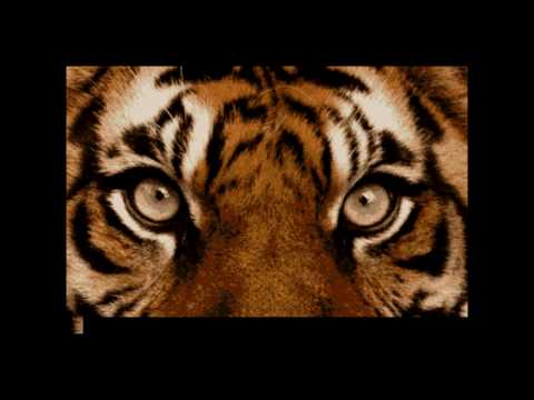 LEO MORACCHIOLI - Eye Of The Tiger (KARAOKE)
