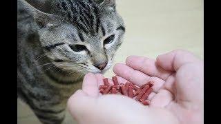 猫が初めてビーフジャーキーをたくさん食べるとこうなります・・・ thumbnail