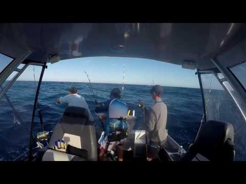 Dolphin Fish Off Sydney Fads