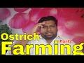Ostrich Farming ( profit ratio ) part2