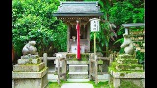 Япония - Философский путь, Отойо - Мышиный храм, Приют для Котов, Киото.