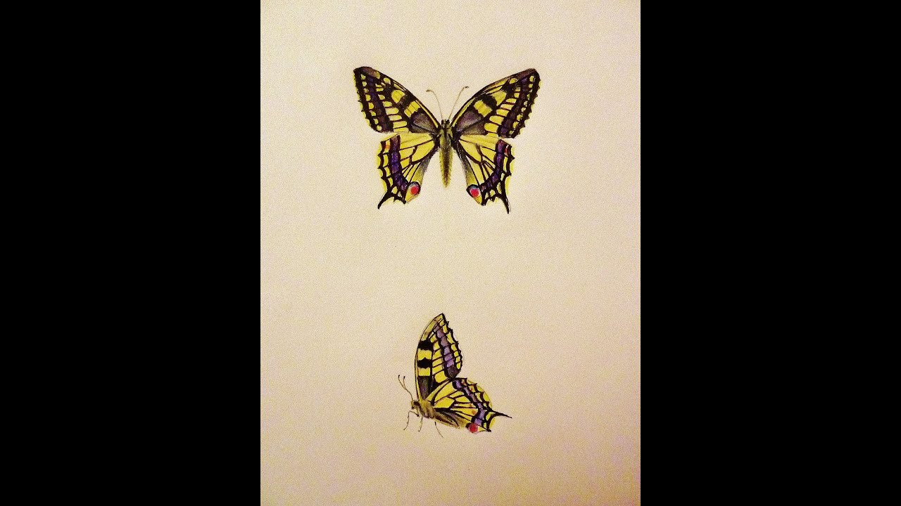 Butterfly drawings in coloured pencils - YouTube