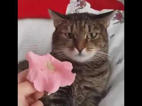 to be continued cat meme