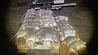 SHOOTING RATS BUILT LIKE CATS !!!