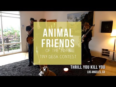 Animal Friends Of The 2018 Tiny Desk Contest