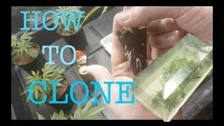 HOW TO CLONE YOUR PLANTS