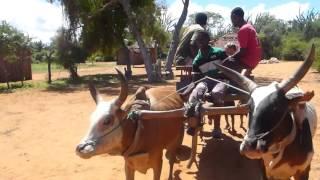 Madagascar - The Eighth Continent