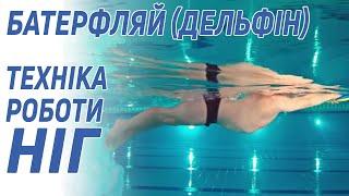 Баттерфляй (Дельфин): техника работы ног - 5 Элемент