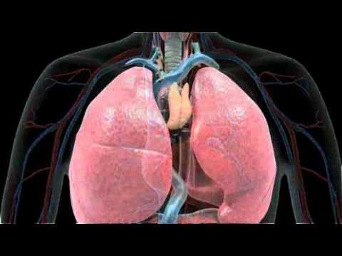 Introduction des effets du tabac sur  l'appareil respiratoire