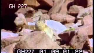Video Animals Mating - Stock Footage download MP3, 3GP, MP4, WEBM, AVI, FLV November 2018