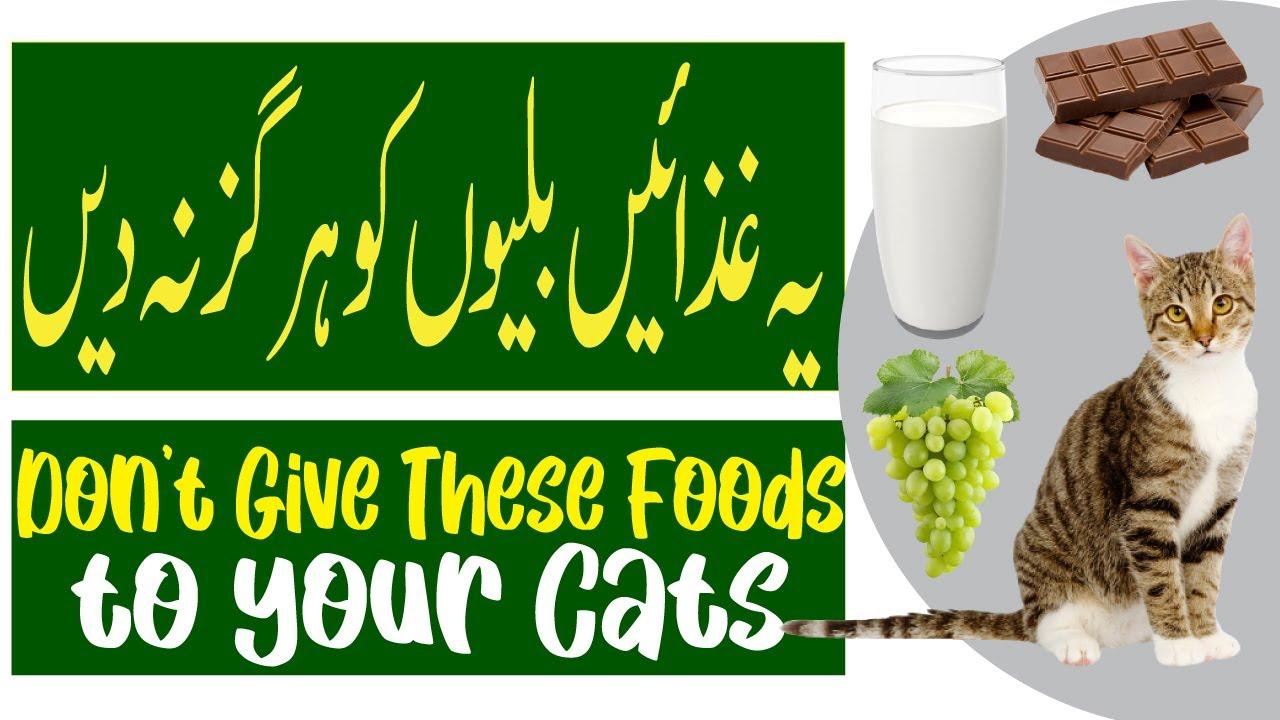 Dangerous Foods Your Cat Should Never Eat