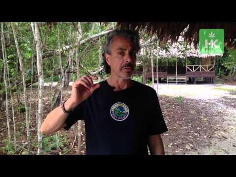 Ayahuasca Guide #5  - Right Dosage of Ayahuasca