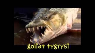 10 najdziwniejszych ryb.