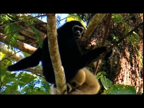 Laos Wonderland full documentary   The Secrets of Nature