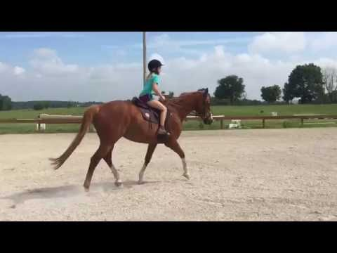 Versailles Trot Right with Beginner Rider