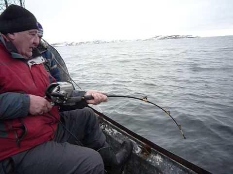 рыбалка в териберке в июне