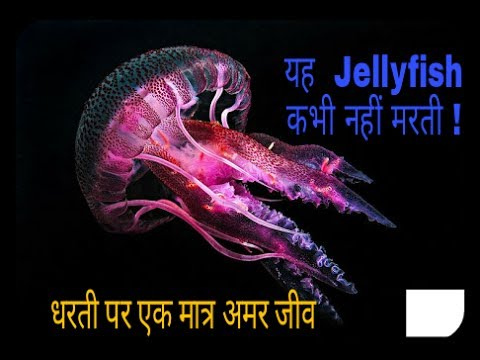 Immortal Jelly Fish -LIVES FOREVER[Hindi]