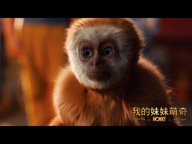 《我的妹妹萌奇》Monky │ 10.26 家有萌猴