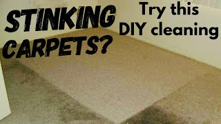 DIY Carpet cleaning | Disinfect your carpet| Baking soda+salt