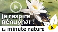 JE RESPIRE NÉNUPHAR (No 55)