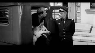 Ко мне, Мухтар (часть 8) Советский художественный фильм