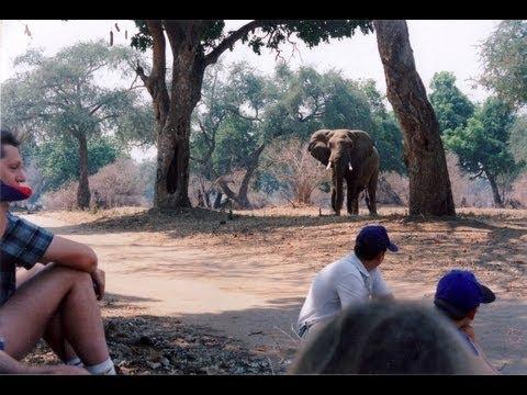 Mana Pools National Park, Zimbabwe. (A world Heritage Site) Travel guide.