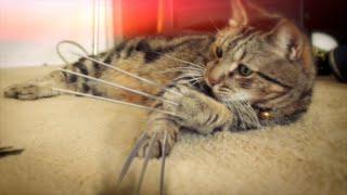 X-Men Origins: Wolverine Cat